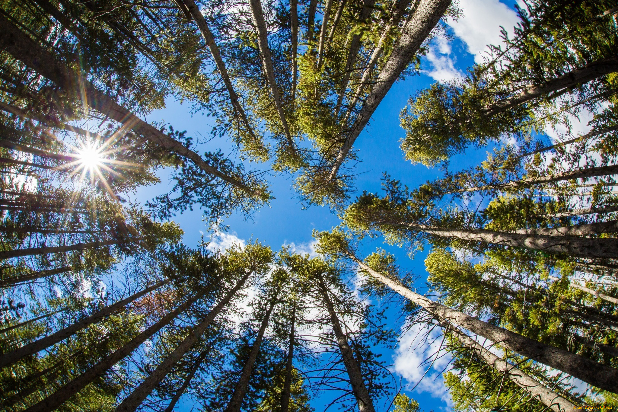 природа, деревья, вершины, стволы, небо, облака